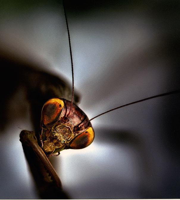 2n premi macrofotografia concurs delta 2016 luis leandro serrano mantis