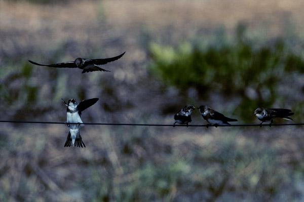 3r premi caça fotografica concurs delta 2016 joan bartrolic ausseil xerrameca a can oreneta